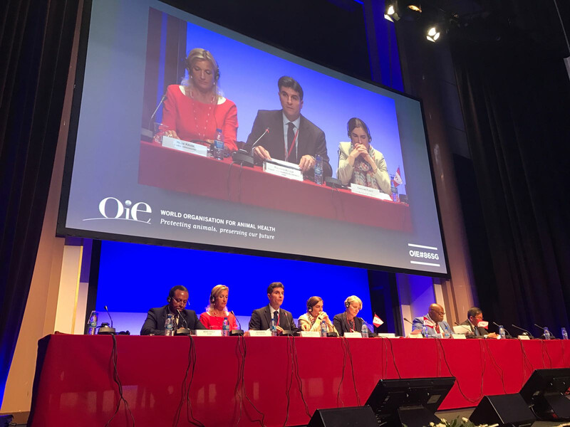 OIE-Conference