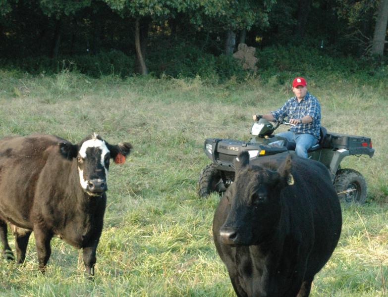 utv_cattle.png