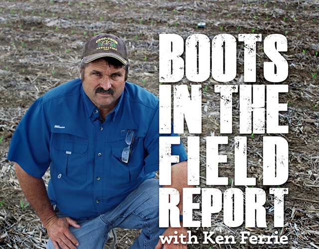 In this week's Boots in the Field Report podcast, Farm Journal Agronomist Ken Ferrie talks about the current crop conditions he is seeing in the field.