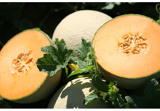 Legend Produce cantaloupe