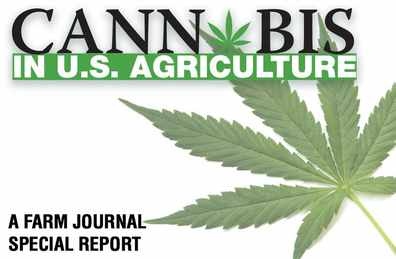 web-image-cannabis