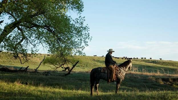 Cowboy-Zoetis