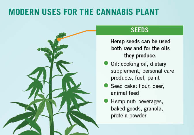 Modern-uses-for-the-cannabis-plant_R1